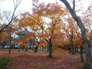 20101205toufukuji01