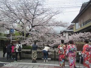 20170407shirakawa02