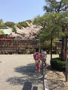 20170414伏見稲荷大社の桜06