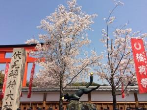 20170414伏見稲荷大社の桜09